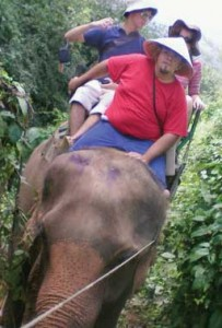 On an elephant to Doi inthanon, Thailand's highest point.